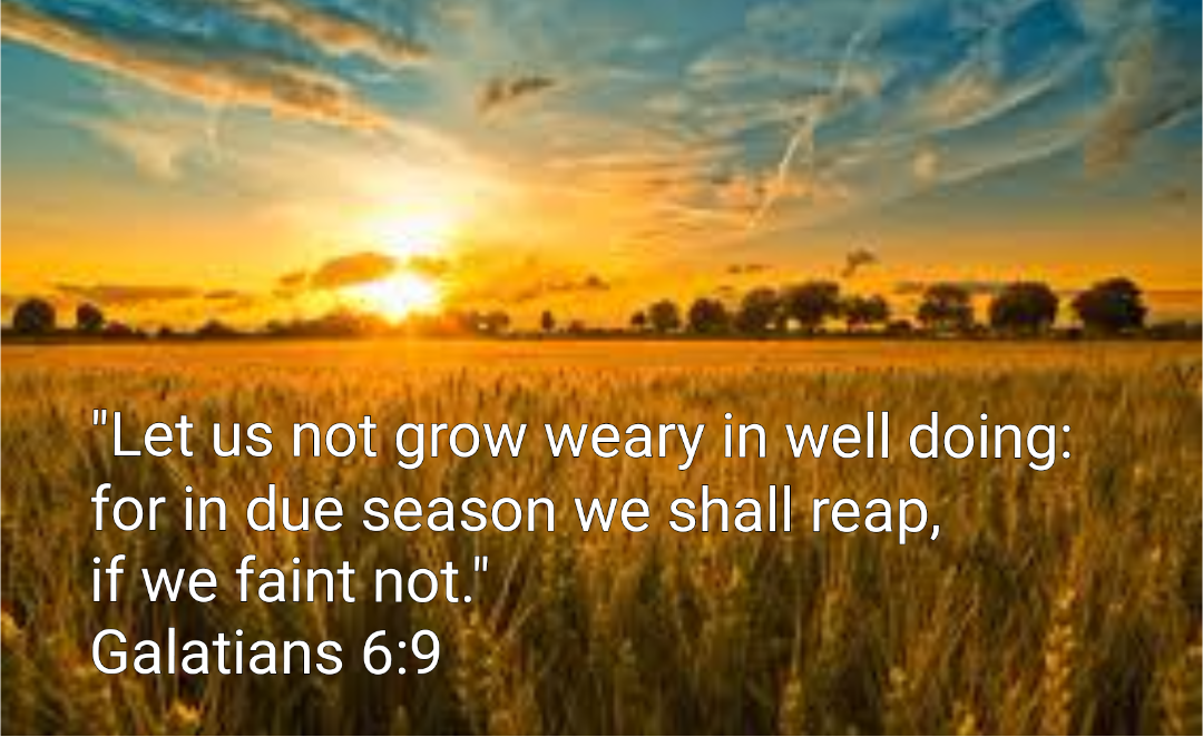 Don't Grow Weary | Ellie May's Garden of Grace